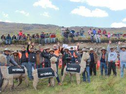 Entrega de alpacas en Huaylla Huaylla