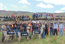 LIVITACA:Hudbay Perú entregó más de 350 alpacas a la comunidad de Huaylla Huaylla