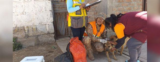 CHUMBIVILCAS: Detectan caso de rabia canina en Santo Tomas